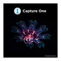 Capture One Pro 20 Sony Upgrade von allen Sony Versionen